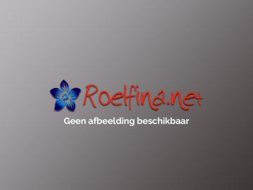 Geen afbeelding beschikbaar - Roelfina.net